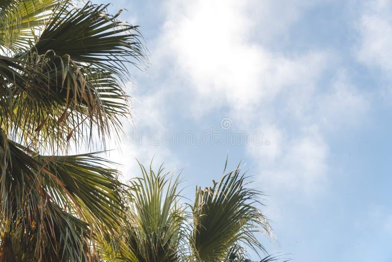 Palmen in een tropische toevlucht bij mooie zonnige dag Beeld van tropische vakantie en zonnig geluk rafelconceptontwerp stock fotografie