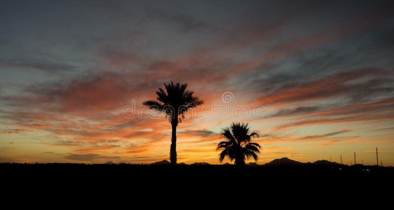 Palmen in een zonsondergang van Arizona royalty-vrije stock foto's
