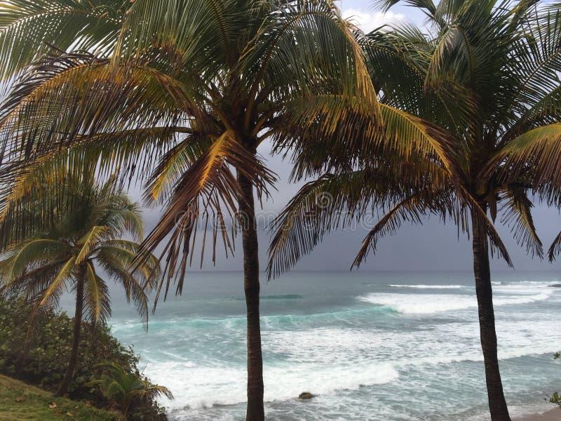 Palmen an einem bewölkten Tag stockfotografie