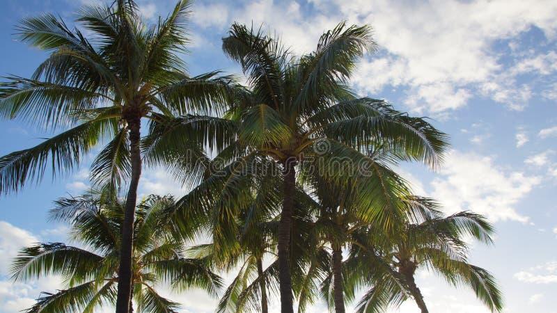 Palmen an einem schönen Sonnentag stockfoto
