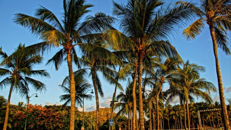 Palmen an einem schönen Tag lizenzfreie stockfotografie