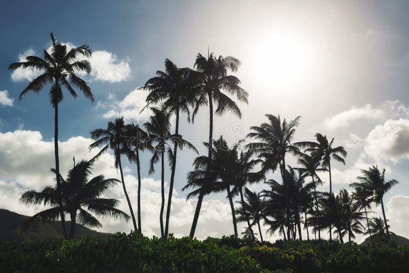 Palmen en blauwe hemelachtergrond bij tropisch strand van Oahu stock afbeeldingen