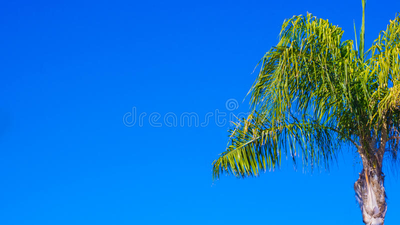 Palmen en Blauwe Hemelen stock afbeelding