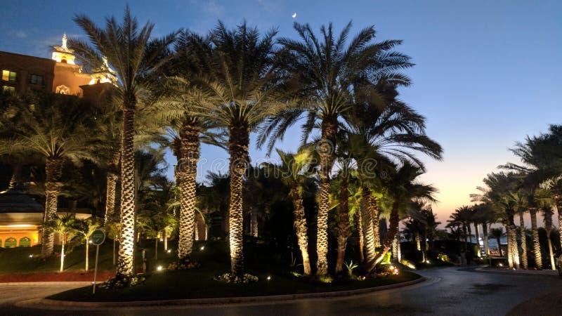 Palmen en blauwe hemelzonsondergang royalty-vrije stock foto's