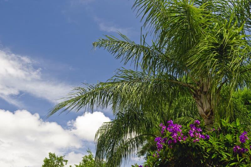 Palmen en bloemen stock afbeeldingen