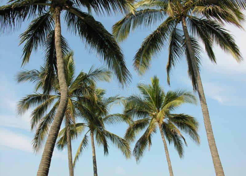 Palmen en Hemel stock foto