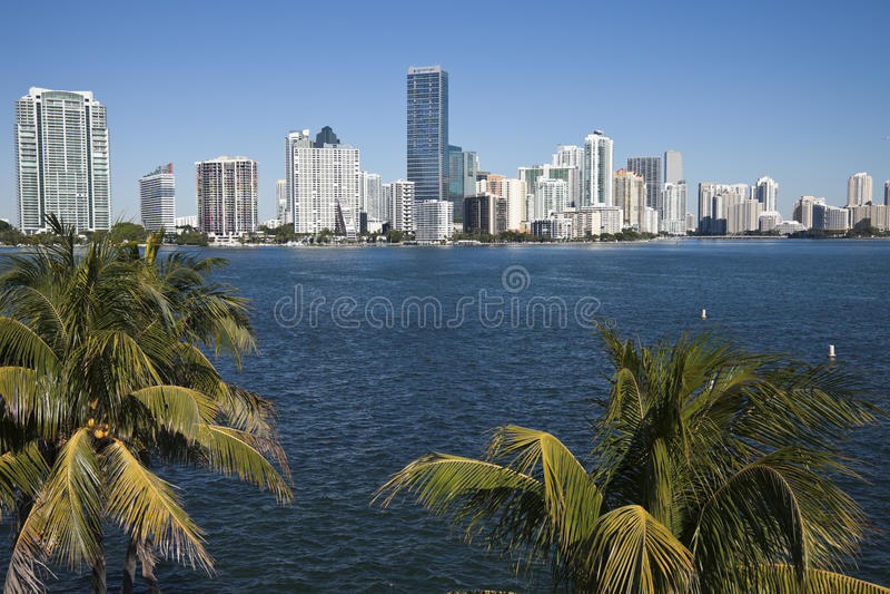 Palmen en horizon van Miami royalty-vrije stock foto's