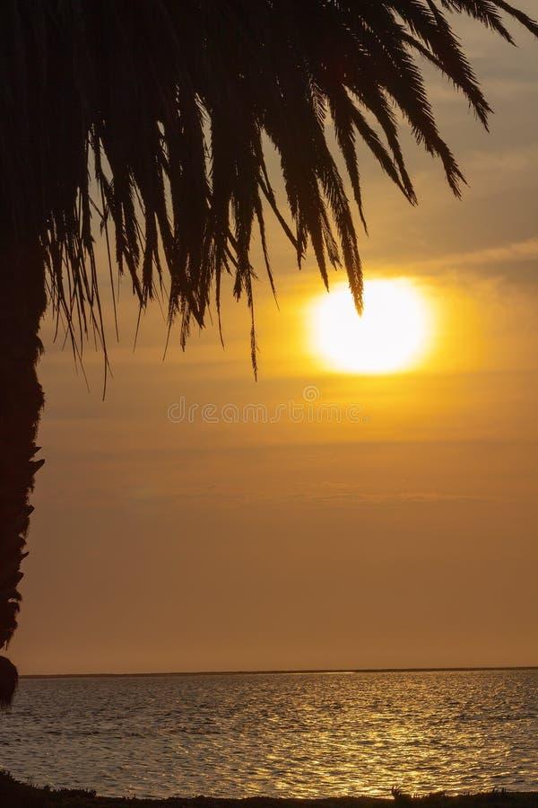 Palmen en kleurrijke hemel met mooie zonsondergang stock foto's