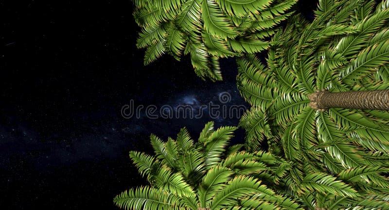 Palmen en nachthemel vector illustratie