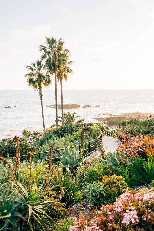 Palmen en tuinen bij Heisler-Park, in Laguna Beach, Oranje Provincie, Californië stock foto