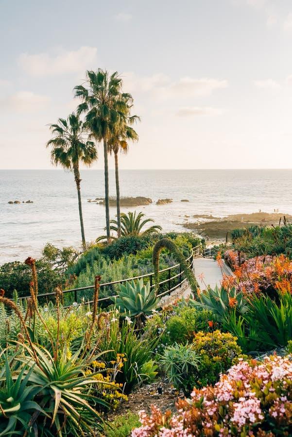 Palmen en tuinen bij Heisler-Park, in Laguna Beach, Oranje Provincie, Californi? royalty-vrije stock fotografie