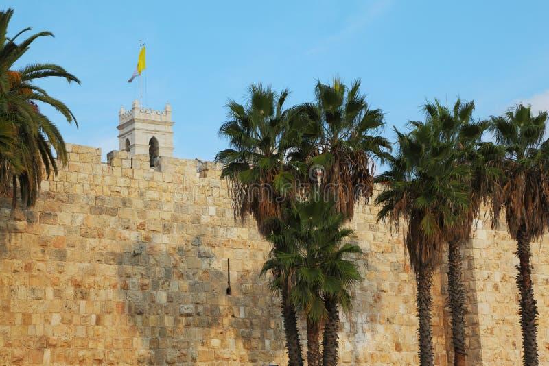 Palmen en vlaggen stock fotografie