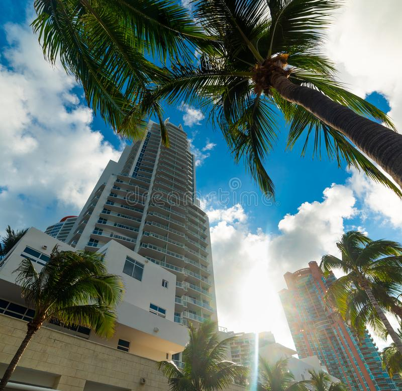 Palmen en wolkenkrabbers in het Strand van Miami royalty-vrije stock foto