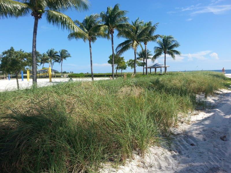 Palmen en zand stock fotografie