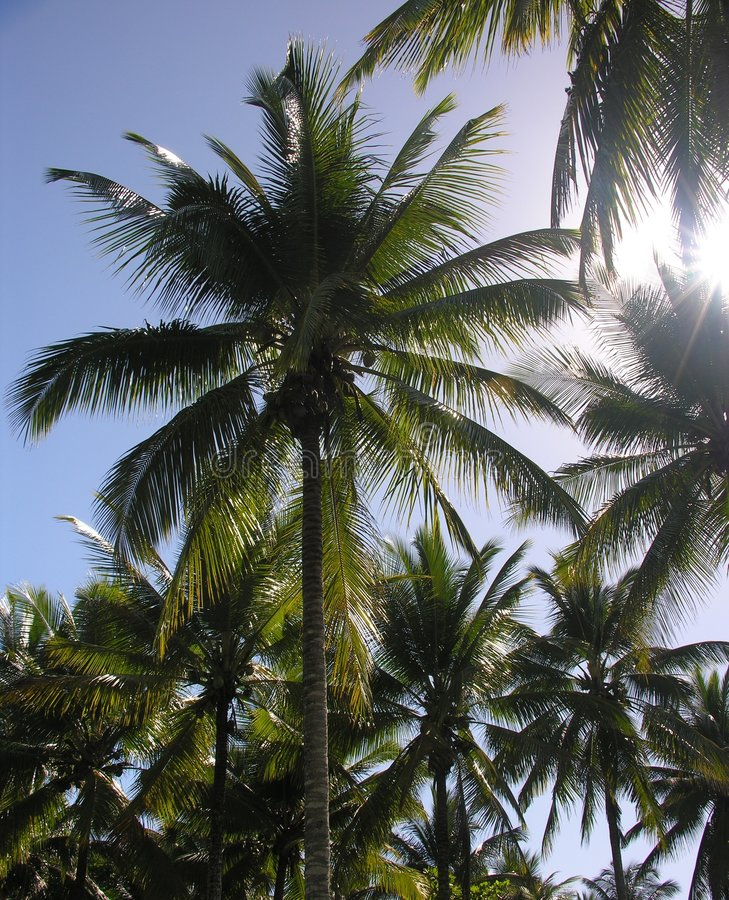 Palmen en Zon royalty-vrije stock afbeelding