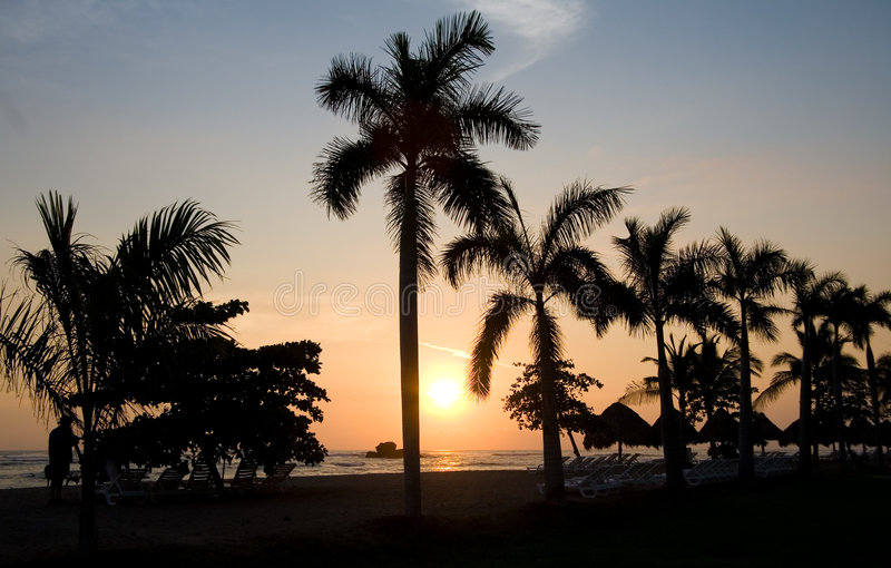 Palmen en zonsondergang royalty-vrije stock afbeeldingen
