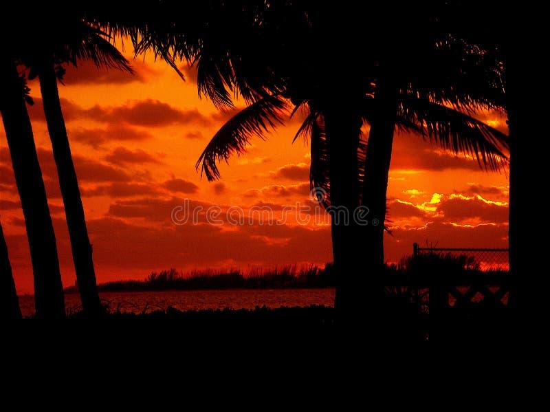 Palmen en zonsondergang royalty-vrije stock fotografie