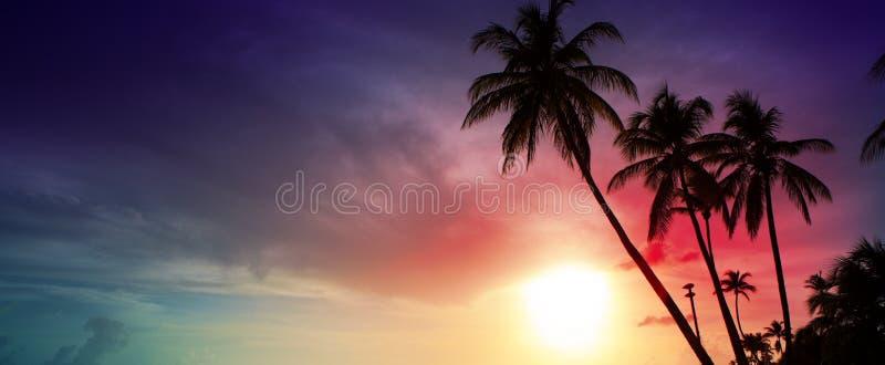 Palmen en zonsondergang op Caribean stock foto