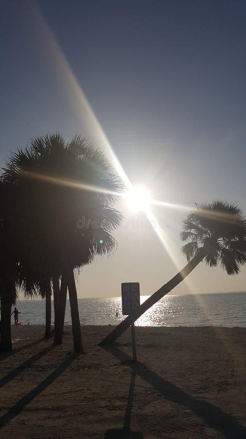 Palmen in Florida royalty free stock photos