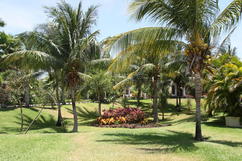 palmen garten stockfoto bild von luxus gr n sch nheit 21625284. Black Bedroom Furniture Sets. Home Design Ideas