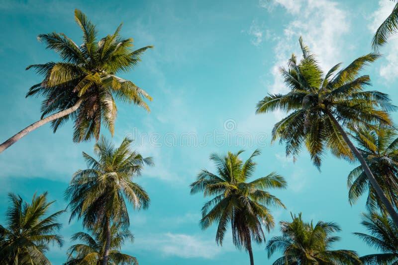 Palmen gegen blauen Himmel, Palmen an der tropischen Küste, Weinlese getont und stilisiert, Kokosnussbaum, Sommerbaum, retr stockfoto
