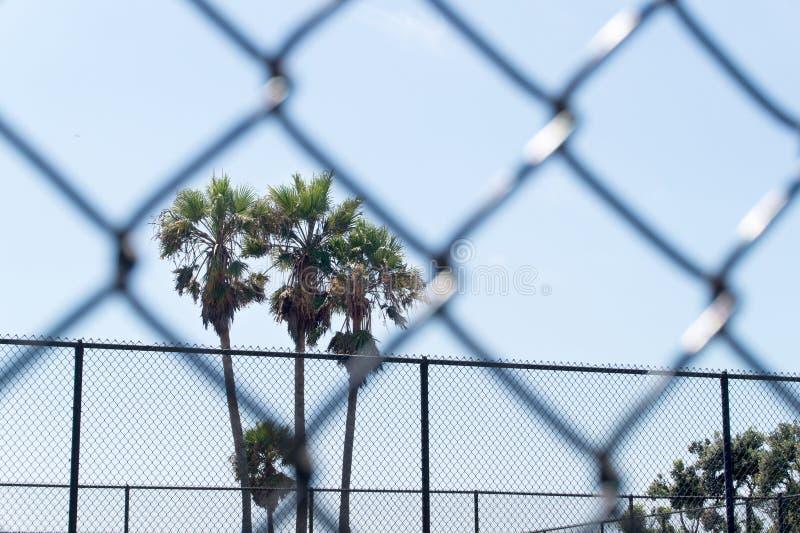 Palmen gestaltet durch Kettengliedzaun im Gefängnis stockbild