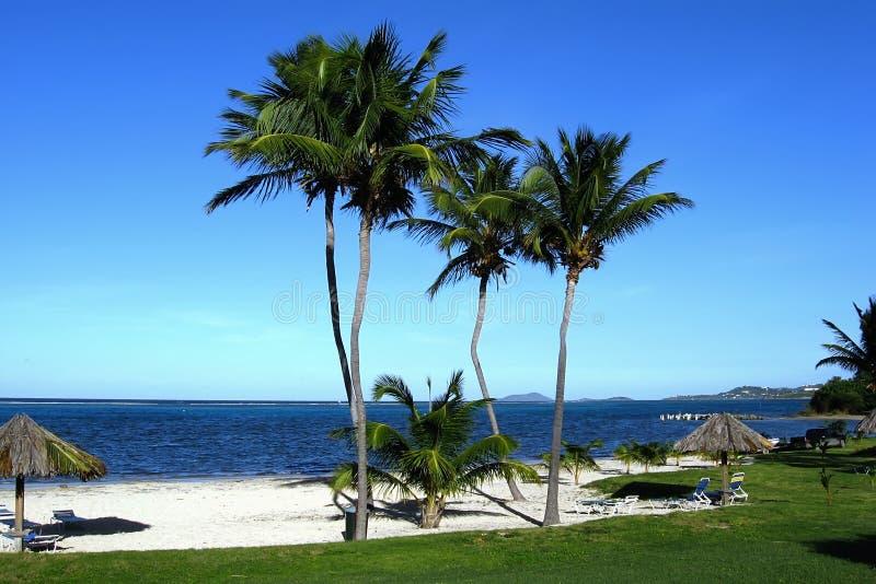 Palmen-gezeichnete Insel-Strand lizenzfreie stockfotografie