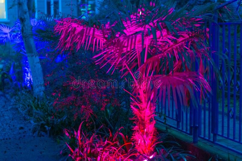 Palmen glühen mit Neonlichtern lizenzfreies stockbild