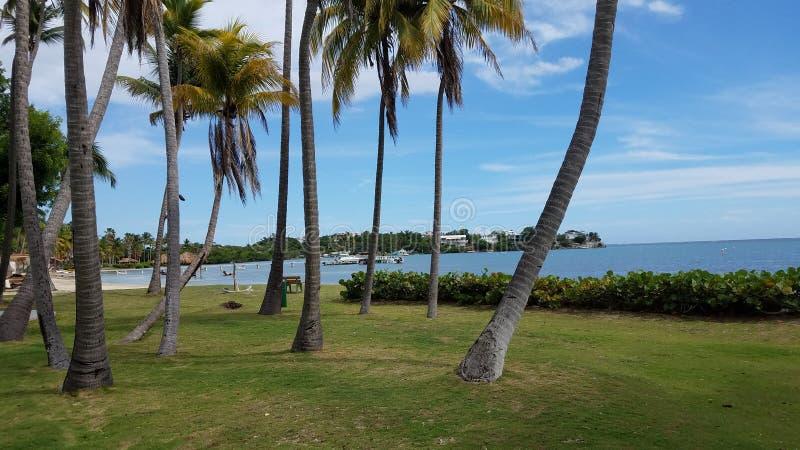 Palmen, gras, en water in Guanica, Puerto Rico royalty-vrije stock foto's