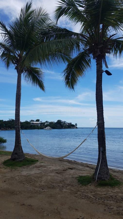 Palmen, hangmat, en boot in water en strand in Guanica, Puerto Rico stock foto's