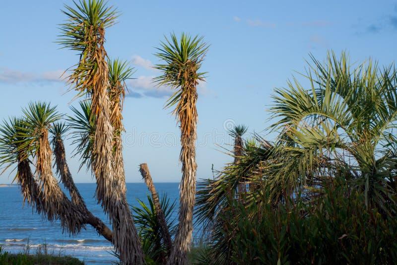 Palmen in het overzees stock foto's