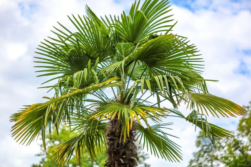 Palmen in het park royalty-vrije stock afbeelding