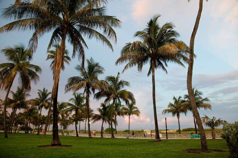 Palmen in het Strand van Miami vóór zonsondergang royalty-vrije stock afbeeldingen