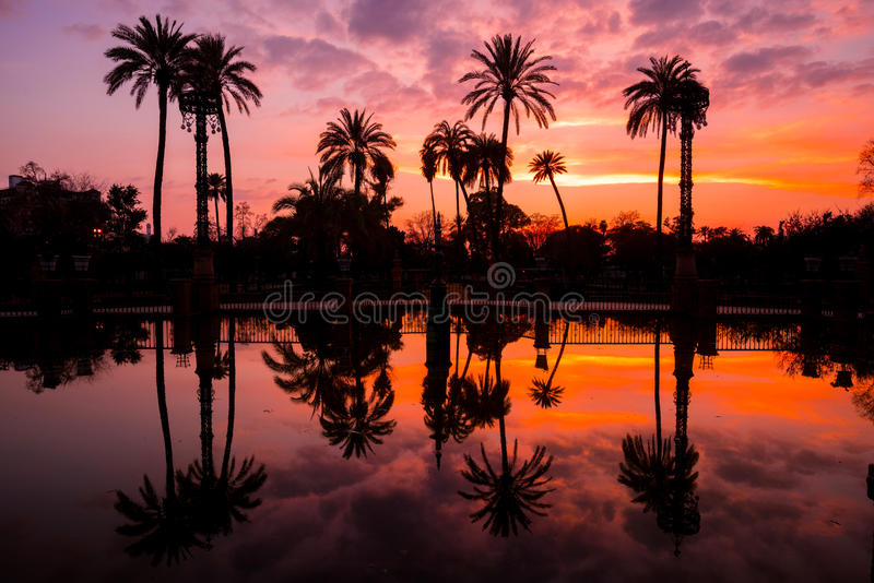 Palmen in het Water in Maria Luisa Park bij Zonsondergang worden weerspiegeld, Sevilla, Andalusia, Spanje dat royalty-vrije stock fotografie