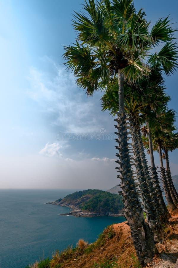 Palmen im Strand nahe Nai Harn-Strand stockfoto