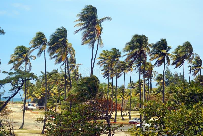 Palmen im Wind auf einem tropischen Strand stockbilder