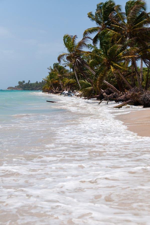 Palmen im Wind auf weißem Sandstrand fahren die Küste entlang lizenzfreie stockbilder