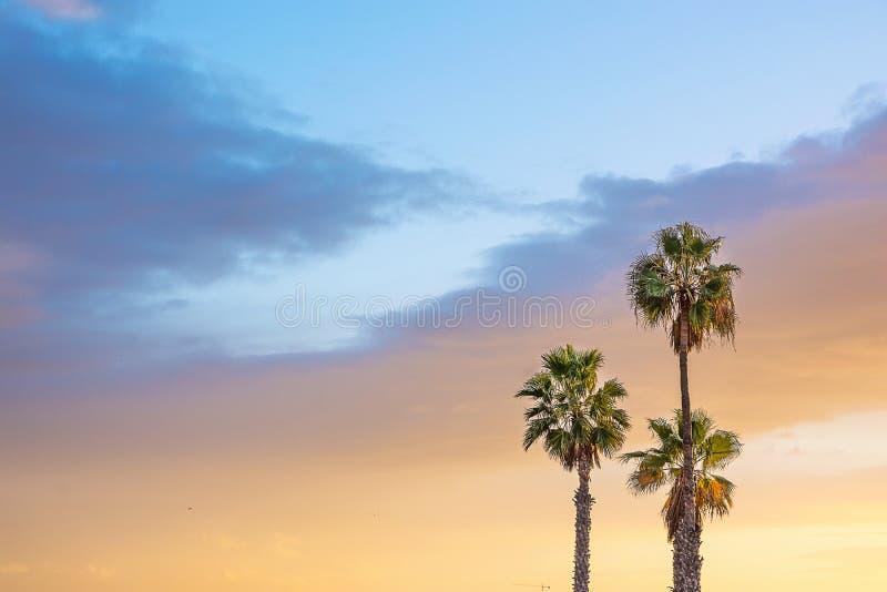 Palmen am Küsten-drastischen schönen blauen rosa pfirsichfarbenen Himmel bei Sonnenuntergang Goldenes Farbpastellaufflackern Hori stockfotos