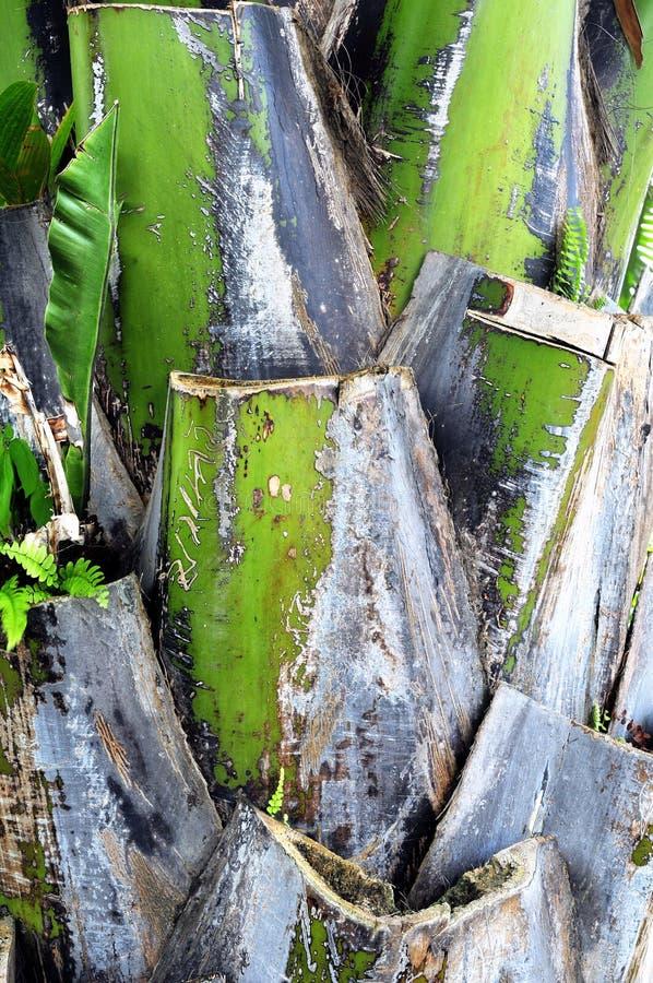 Palmen-Kabel stockfotos