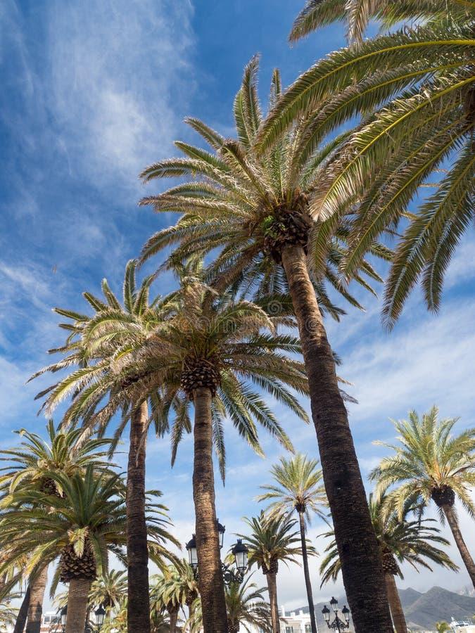 Palmen langs de kust in Nerja bij mooie zonnige dag Beeld van tropische vakantie en zonnig geluk spanje stock afbeelding