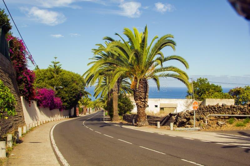 Palmen langs de weg dichtbij het overzees royalty-vrije stock foto's