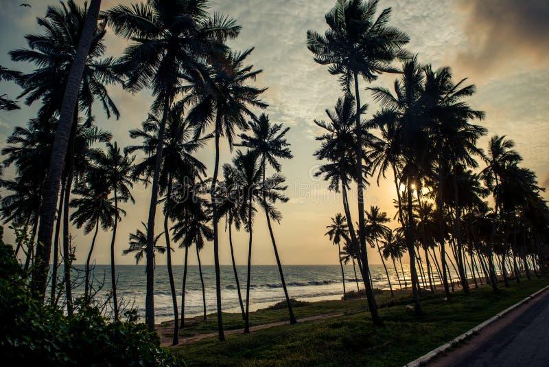 Palmen langs een kustweg stock afbeelding