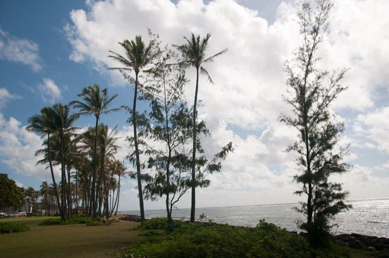 Palmen langs het Strand in Kapaa op Kauai stock afbeelding