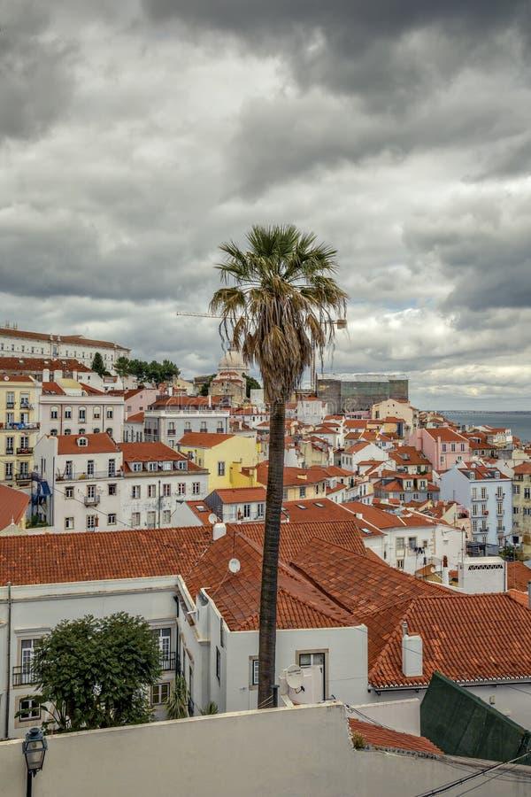 Palmen in Lissabon met een mening van de stad en het overzees royalty-vrije stock afbeelding