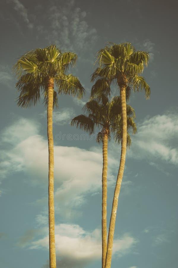 Palmen Los Angeles Californië de V.S. royalty-vrije stock afbeelding
