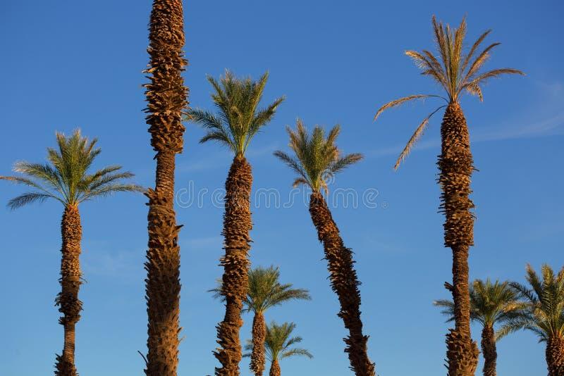 Palmen met mooie blauwe hemel bij zonsondergang royalty-vrije stock foto's