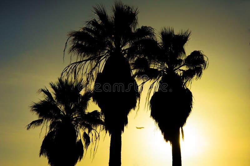 Palmen met vliegtuig bij zonsondergang stock foto