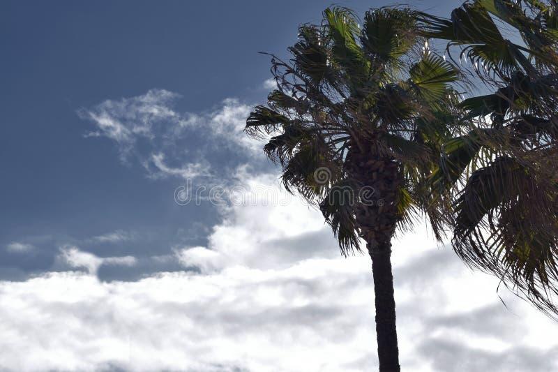 Palmen mit bewölktem Himmel stockfotos