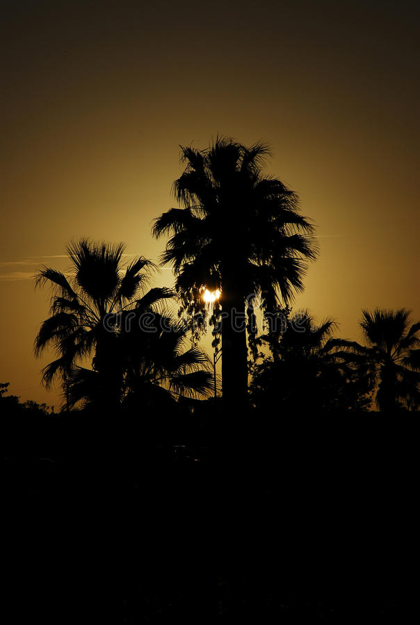 Palmen mit Sonnenuntergang stockfotografie