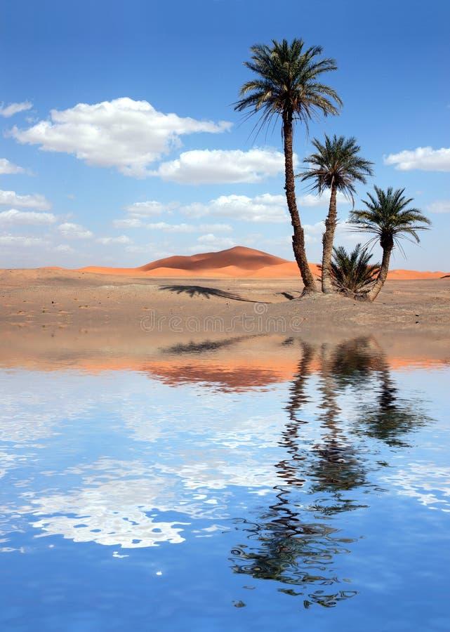 Palmen nähern sich dem See in der Sahara-Wüste lizenzfreie stockfotos